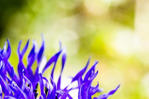 2012_05_Flowers-206