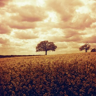 Redscale Field