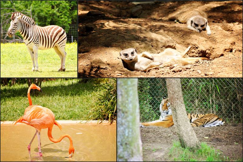 animal blog4