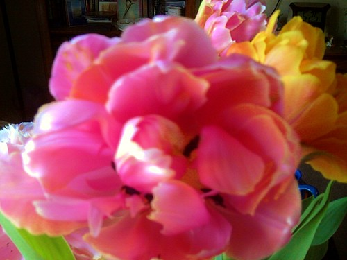 Mother's Day gift from Bear, Beautiful strongly-scented double tulips! by Quilter Bear