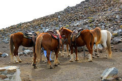 Prepared for horse riding on Sliding Sands