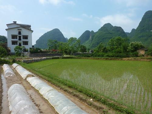 C-Guangxi-Yangshuo-Tour-Yulong (62)