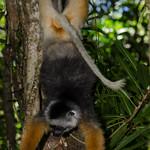 20120111_Madagascar_0128