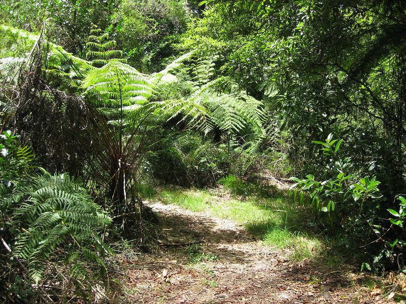 Olinda Creek Track - Dandenong Ranges National Park