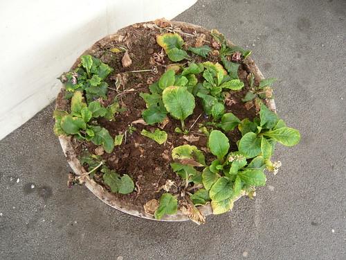 Harrogate Station planter