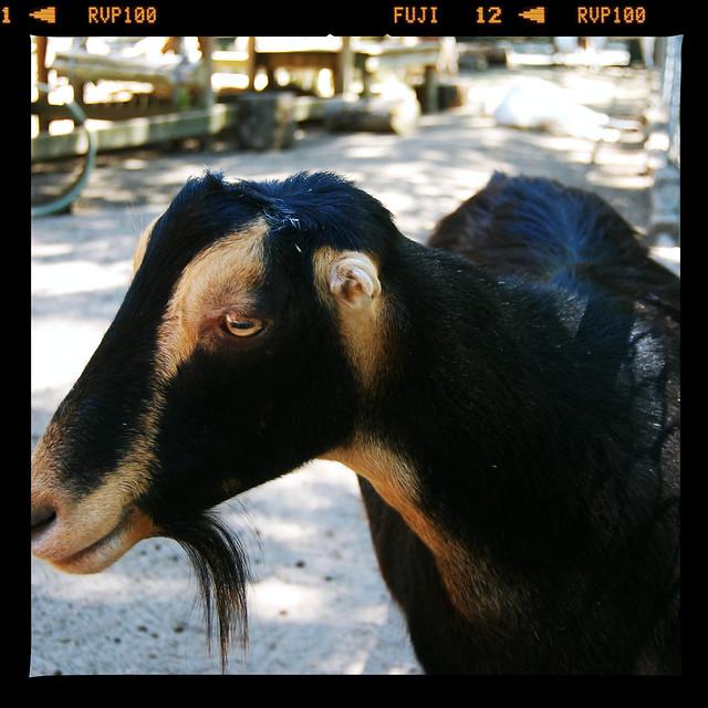 Zoo0712 027