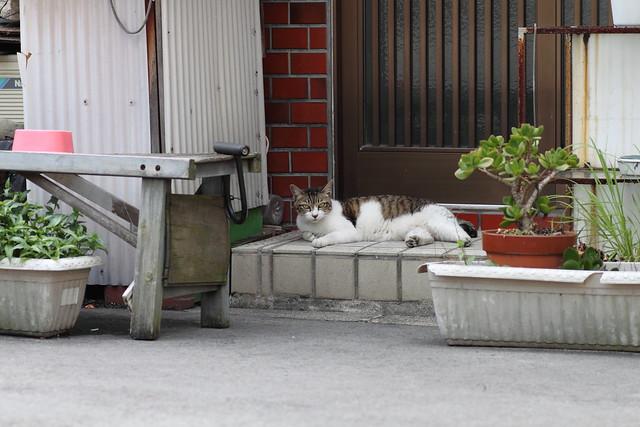 自宅警備員の猫 1