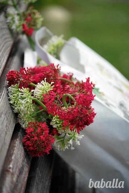 flores_silvestres_baballa
