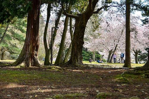 @Nara Park by hyossie