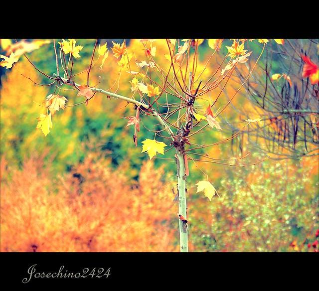 Colores y colores