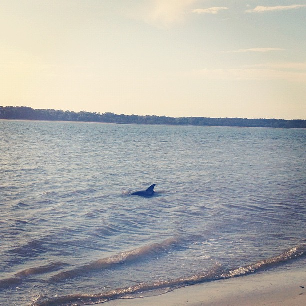 Our evening visitors. #beach #dolphin