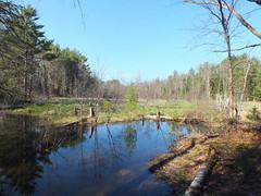 Beaver Pond, Readfield