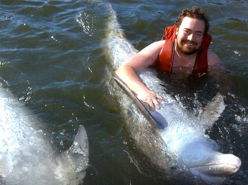 Delfinkos