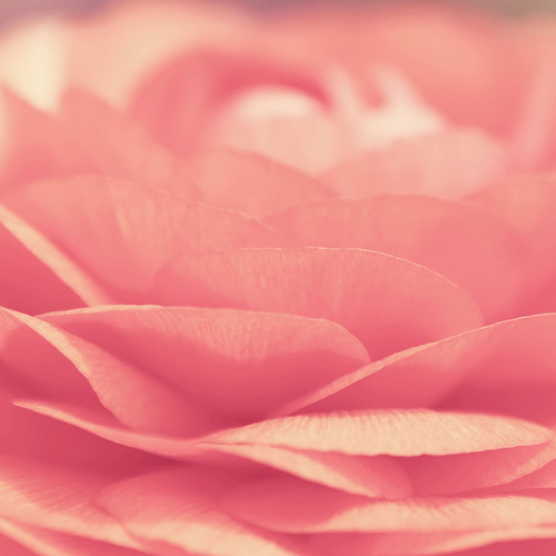 Pink-Flower-Closeup.jpeg