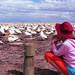 gannet2 by gwennie2006