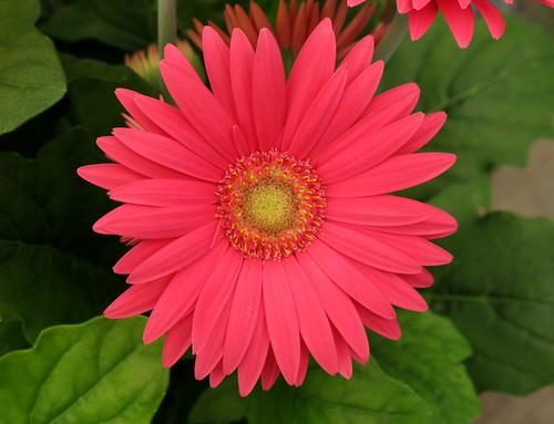 Maryland Flower Fields - Flowers Ideas