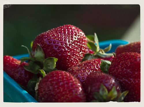 strawberries 03 050512 LR-6580-2