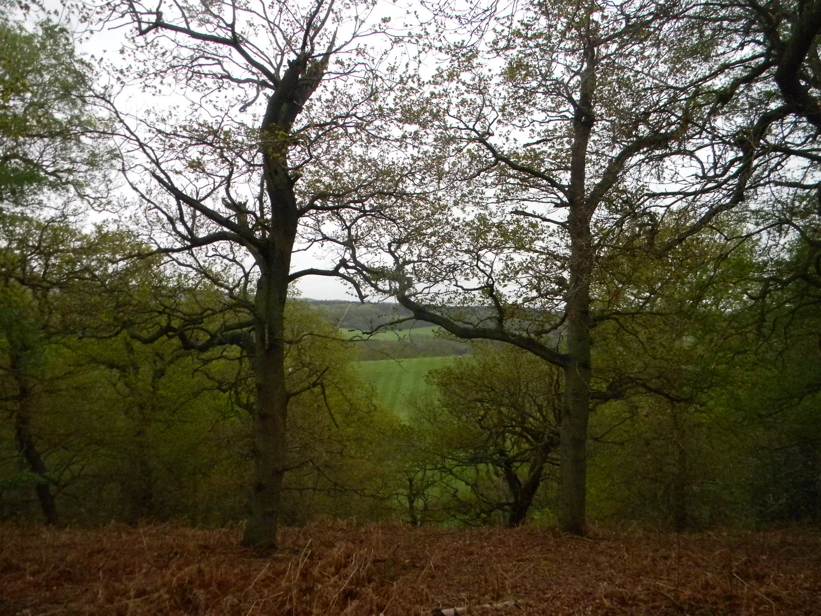 View through trees Guildford to Westhumble