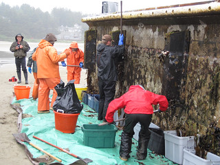 ODFW workers clean marine organisms from Japanese dock