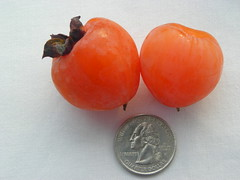 Meyer seedless persimmon