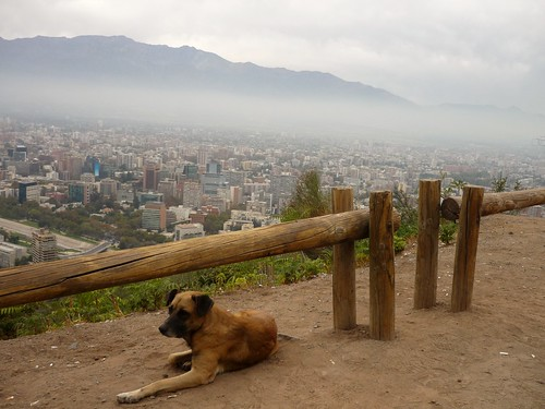 Dog in Santiago
