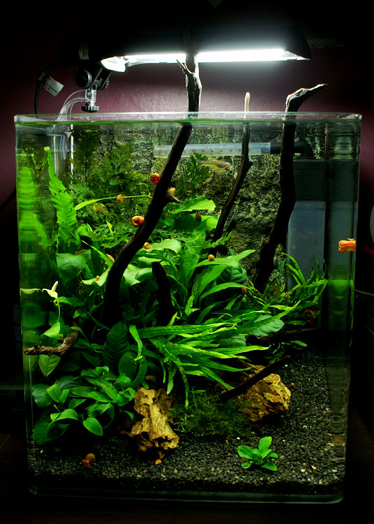 fluval flora 30l nano planted tank tropical fish forums. Black Bedroom Furniture Sets. Home Design Ideas