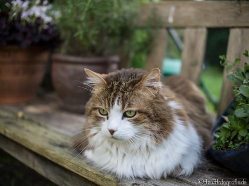 Cat 14.05.2012