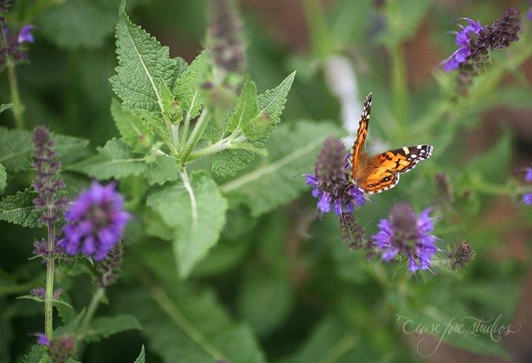 05-16-butterfly3
