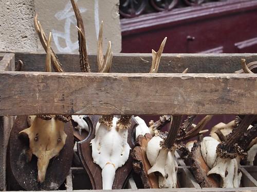 l'object bones
