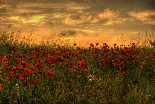 Poppies & sunset