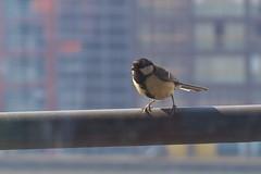 animal, sparrow, wing, fauna, swallow, emberizidae, beak, house sparrow, bird,