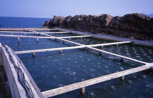 養殖魚類無法解決無魚。(圖片來源:林務局提供)