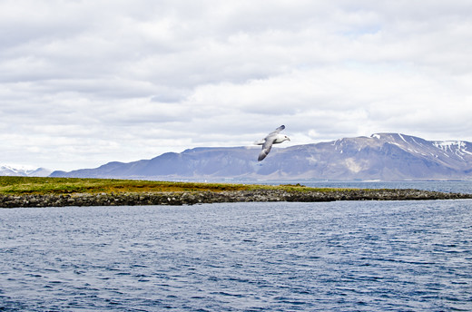 Iceland – Reykjavik harbour
