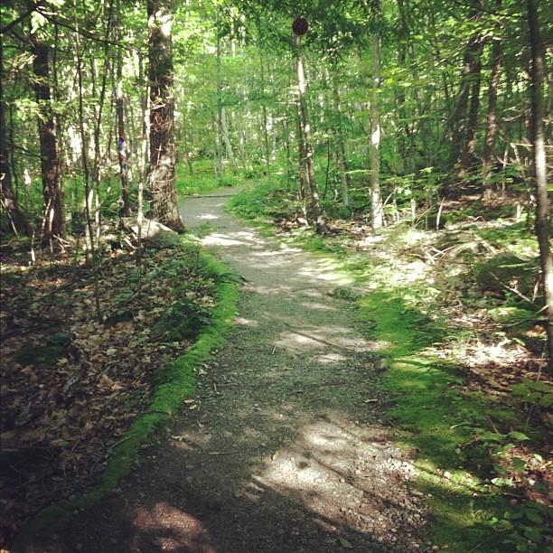 Moss path....