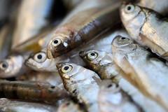Fish Fresh Catch