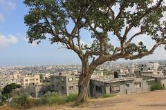 Gazaby