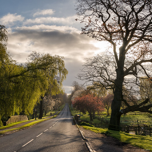 road morning trees light sky tree clouds sunrise landscape spring nikon shade april stokeontrent staffordshire wedgwood gbr barlaston wedgwoodestate threeshiresphotographers d800e nikond800e