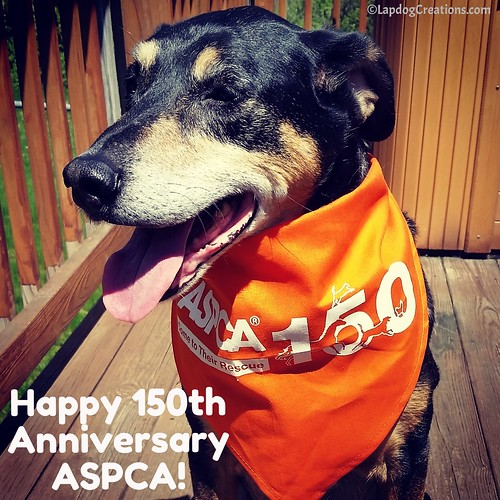 Happy 150th Anniversary ASPCA! #ASPCA150 #RescueDog #AdoptDontShop #LapdogCreations ©LapdogCreations #SeniorDog #RescuedIsMyFavoriteBreed