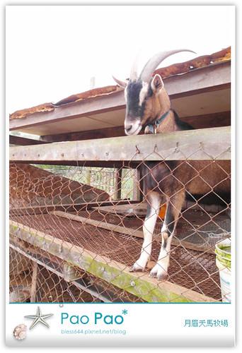 月眉天馬牧場-草泥馬