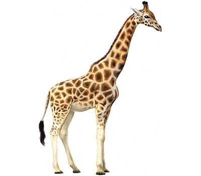 This is where I'd put in what a giraffe says, but they don't have a larynx.