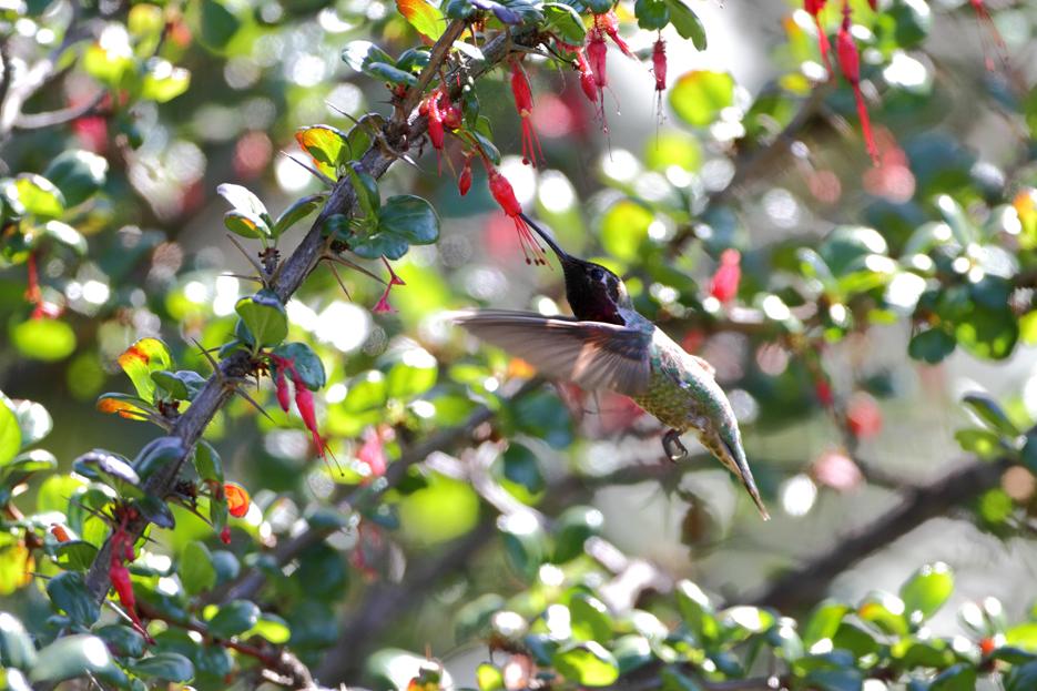 042112_01_bird_hummingbird02