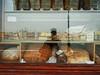 the wonderful Italian breads ...
