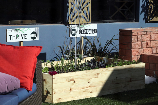 The ONE garden in the Big Brother Africa house