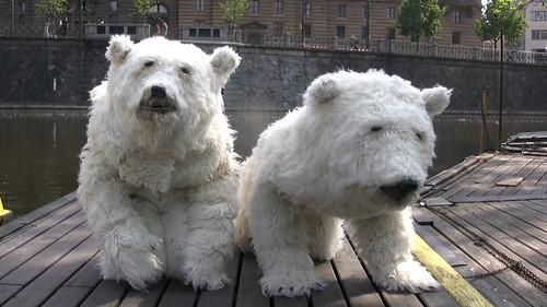 Medvědi přijíždějí do Prahy