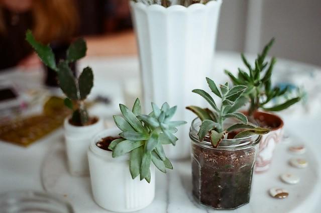 Leah's plants