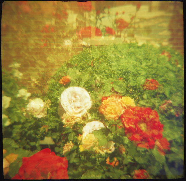 Roses in Stereo