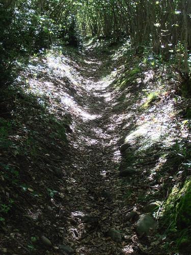 LA MATURE (chemin) 105
