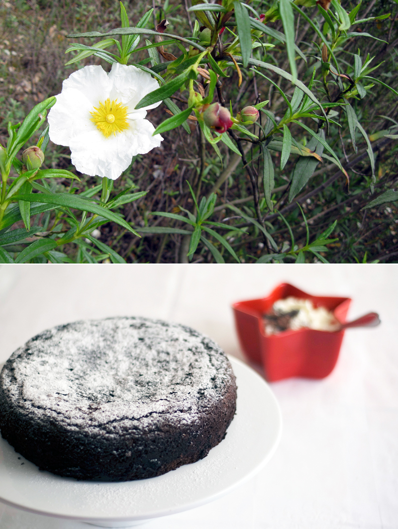 Bolo de chocolate e beterraba // Beetroot Chocolate Cake