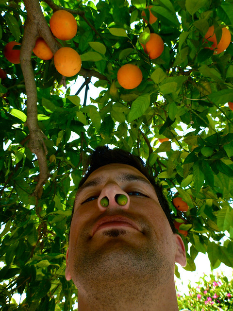 two oranges up me nose