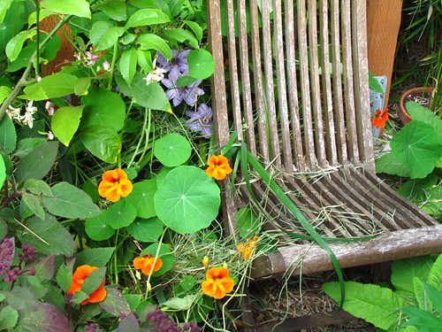 The Nasturtium Throne